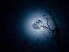 Juni: Robert Heitzer, Mondlicht