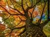 06-ct-herbstbaum