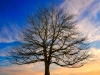 01-gk-01-einzelbaum-2016-12-15-koenigssee-006-unbenannt-frei