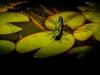 Guenther Keil - Heut schmück ich mich mit einer Libelle