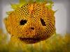 Robert Heitzer - Sonnenblumen