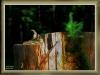 ebersberger-forst-039-rh-wald-04