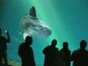 akquarium-01_Walter_Schneider_-_Ocean_Sunfish