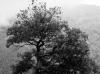 Februar: Robert Müller, Baum im Nebel