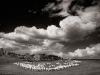 September: Karl Huber  - Schaefchen-Wolken