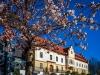 April: Günther Keil - Rathaus unter Blüten