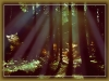ebersberger-forst-019-rh-wald-03