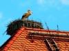 Unser Storch